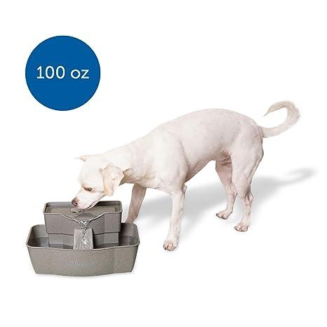 Amazon.com: Bebedero PetSafe fuente de agua de varios ...