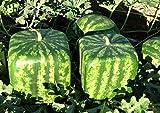 Large Watermelon Mold Square Shape