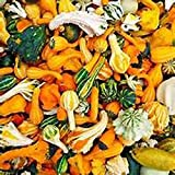 Gourd Seeds Small Mixed Gourd Seeds, 25 seed pack ,ORGANIC, USA PRODUCT. PACKED BY JACOBS LADDER ENT. (25)