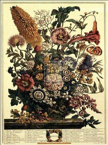 Robert Furber - Twelve Months of Flowers 1730/August 15 x 20 (Months Twelve Flowers Of)