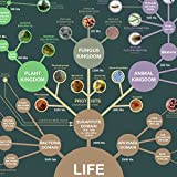 Evolution & Classification of Life Poster 24x36