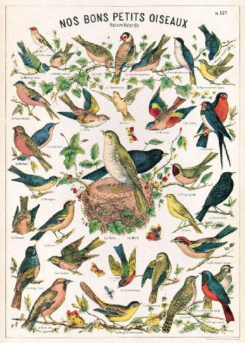 (Cavallini Decorative Paper- Bird Chart 20x28 Inch Sheet )