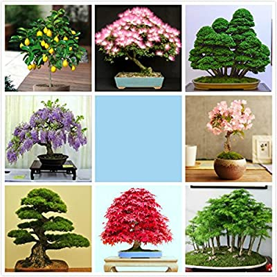 8 Species Garden Bonsai Seeds
