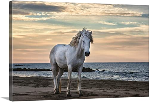 The White Horses of The Camargue on The Beach