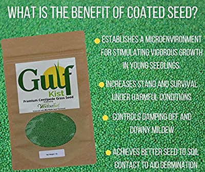 Gulf Kist Centipede Grass Seed Coated
