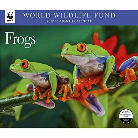 frogs 2019 12 x 12 inch monthly square wall calendar wildlife animals multilingual edition