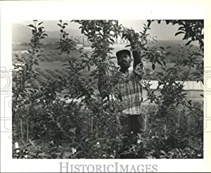Historic Images -1992 Press Photo Rudy Barnes of Apple Acres Apple Orchards Prunes in Lafayette