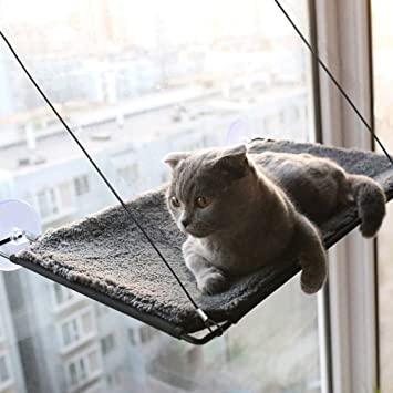 Amazon.com: Percha para ventana de gato BobbyPet – una capa ...