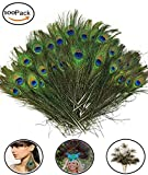 """Fashionclubs 100pcs Christmas Decor Natural Peacock Tail Eyes Feathers 8""""-12"""""""