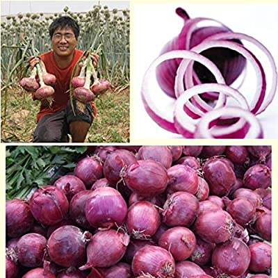 Bravet Vegetables Seeds - 100pcs Red Onion Seeds Organic Allium Cepa Vegetables Seeds Home Garden Planting : Garden & Outdoor