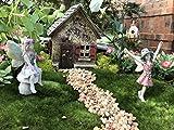 Miniature Fairy Garden Hummingbird Hidaway House and 4 piece accessories starter kit (bundle) by WFG. Create Your Own Magical Fairy Garden.