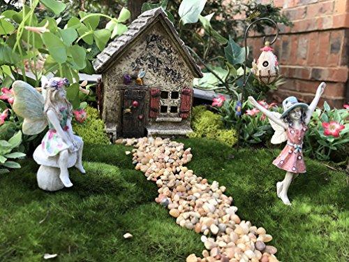 Hummingbird Garden Kit (Miniature Fairy Garden Hummingbird Hidaway House and 4 piece accessories starter kit (bundle) by WFG. Create Your Own Magical Fairy Garden.)