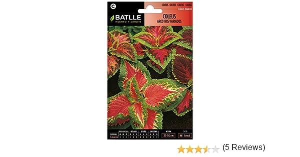 Semillas de Flores - Coleus Arco Iris variado - Batlle: Amazon.es: Jardín