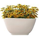 Yuccabe Italia Cream White 14 Inches ASA Ktr Bonsai Tray Planter