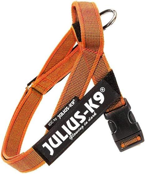 Julius K9 Arnes Cinta,Color & Gray Size: Mini - Mini, Naranja 1 ...