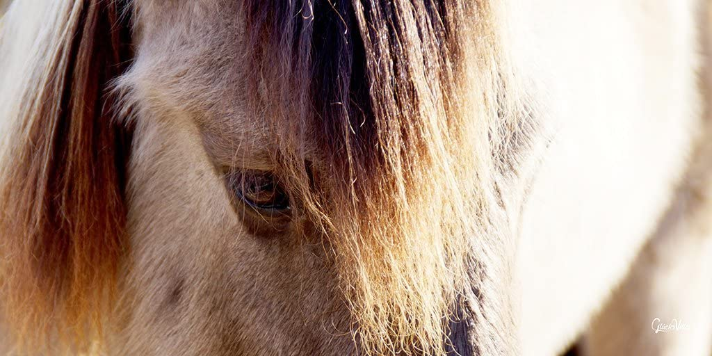 Wildpferd 2 – Exclusivo artista XXL – Cuadro de 80 x 40 cm horizontal, impresión digital sobre lienzo, bastidor 2 cm – Caballo Pony agrícola natural animal grande
