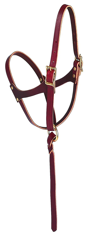 Weaver Leather figure figure figure 8 Foal Halter, Russet, 5 20,3 cm 02f2ef
