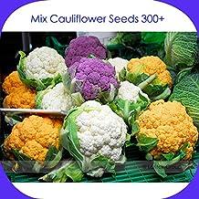 Mix Four Varieties Cauliflower Seeds, Professional Pack, 300 Seeds / Pack, Heirloom Organic Vegetables Golden Purple White Green