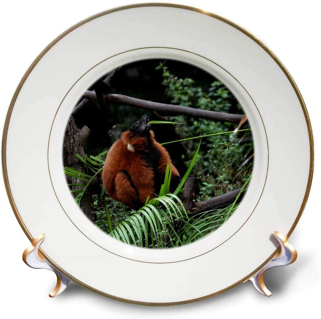 Lemur Porcelain Plate w// Display Stand