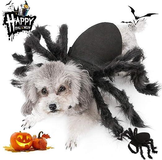 Amazon Com Meetlover Halloween Pet Big Spider Costume Cats