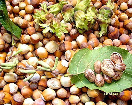4 Pound (1816 grams) Stir-fried hazelnut Grade A from Northeast China