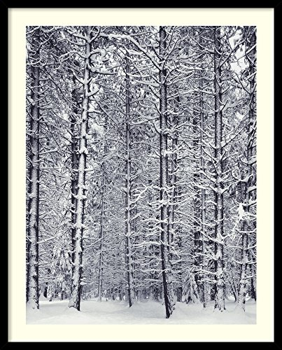 Framed Wall Art Print Pine Forest in The Snow, Yosemite National Park by Ansel Adams 25.00 x 31.00 (Ansel Adams Gallery Yosemite National Park)
