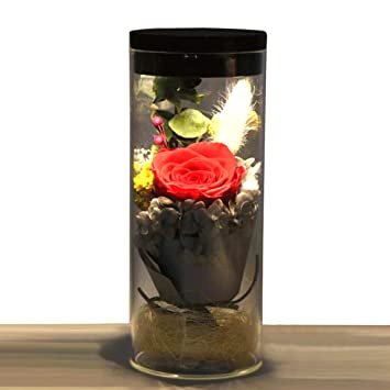 Jiewo Conservado Rosa Real Natural Flor Fresca Hecha a Mano romántica Rosa Botella luz con 4 Colores Regalos para Novia, Mujeres, niñas, Hermanas, día ...