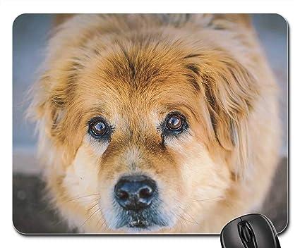 Amazon Com Mouse Pads Animal Dog Cute Closeup Furry Eyes Puppy