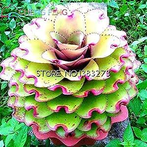 Mejor la venta de jardín de la mini planta de 30 semillas raras Sempervivum Mix Semillas Flores suculentas para la sala de Bonsai en maceta Plantas * Gift