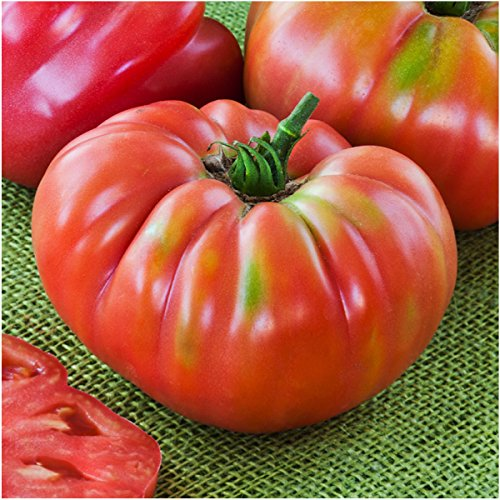 Beefsteak German Tomatoes (Package of 80 Seeds, German Johnson Tomato (Solanum lycopersicum) Non-GMO Seeds by Seed Needs)