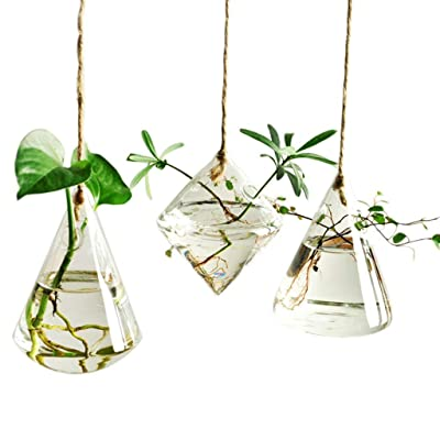 Indoor Outdoor Glass Hanging Planters Plant Pots Water Plant Containers Flower Pots Glass Terrariums 3 Pieces: Garden & Outdoor