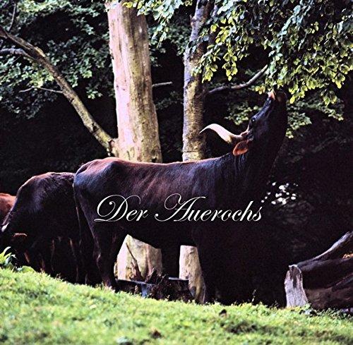 Der Auerochs: Das europäische Rind