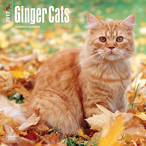 Ginger Cats - 2017 Calendar 12 x 12in