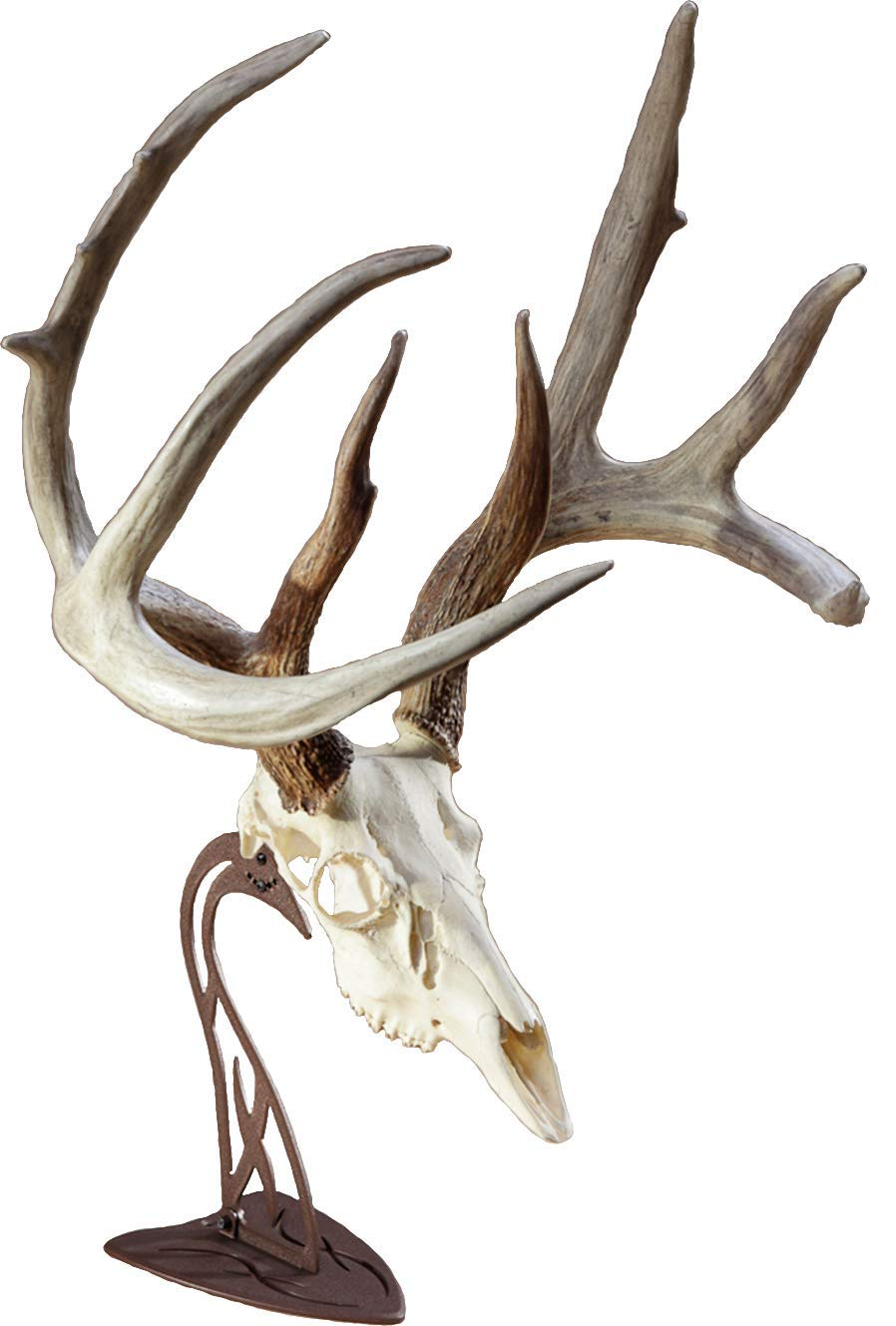 Skull Hooker Table Hooker European Trophy Mount - Perfect Kit for Table Display of Taxidermy Deer Antlers and other Skulls - Robust Brown
