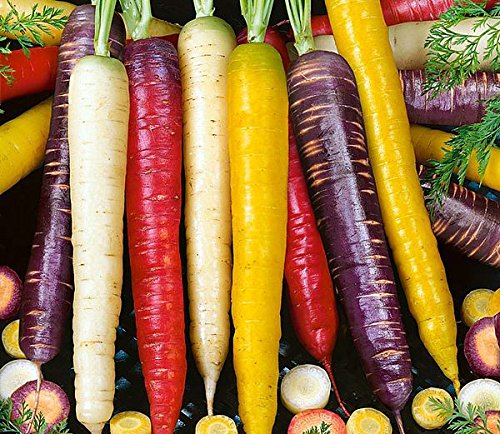 YakovSeeds 550+ ORGANICALLY GROWN Rainbow Blend Carrot Seeds Heirloom NON-GMO, Daucus carota var. sativus, Colorful, Healthy, Sweet and Juicy, From USA.