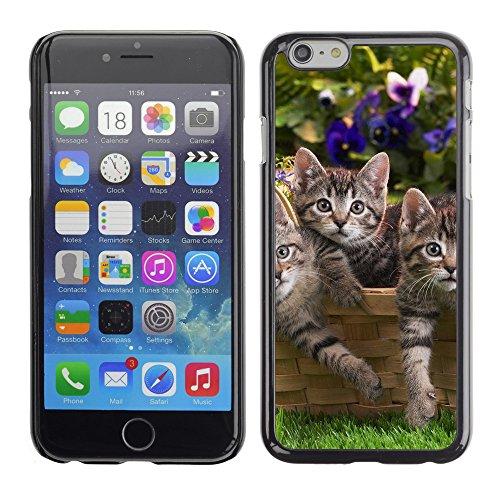 "Premio Sottile Slim Cassa Custodia Case Cover Shell // V00003505 chatons dans le panier // Apple iPhone 6 6S 6G PLUS 5.5"""