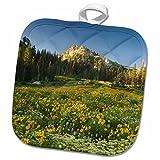 3dRose Danita Delimont - Flowers - Wildflowers, Willard Basin near Mantua, Utah, USA - US45 HGA0384 - Howie Garber - 8x8 Potholder (phl_147285_1)