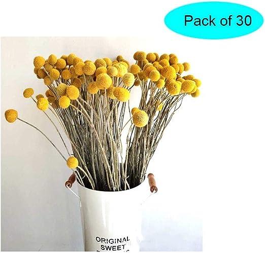 Ramo de Flores secas decoraci/ón 100 Tallos de Ramo Accesorios de Tiro para Boda Fiesta 100 x realistas Trigo Artificial Ramo de Flores secas