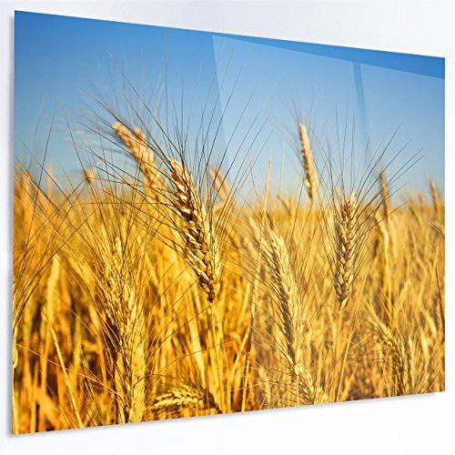 Designart MT14246-40-30 Bright Golden Wheat Field - Landscape Wall Glossy Metal Wall Art - 40x30,Gold,40x30 - Gold Wheat Design