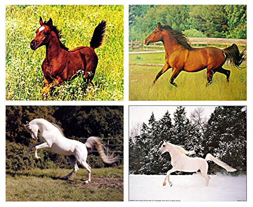 Arabian Mare, White Horse Wild Animal Four 8x10 Set Pictures Wall Decor Art Print Poster by Impact Posters Gallery