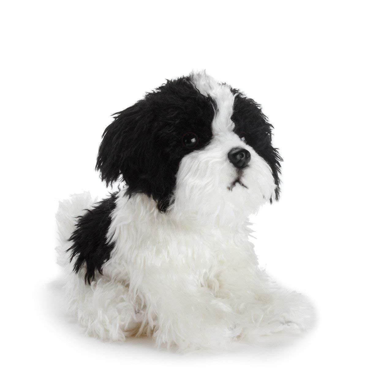 Amazon Com Demdaco Sitting Small Havanese Dog Black And White