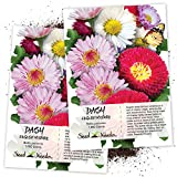 Seed Needs, English Daisy Mixture (Bellis perennis) Twin Pack of 1,000 Seeds Each