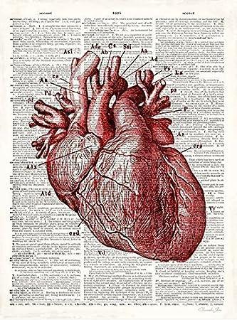 Amazon.de: Fertig-Bild - Christopher James: Vintage Anatomy Heart 24 ...