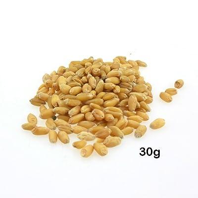 800/1600pcs Cat Grass Seeds, Easy to Grow Organic Cat Grass Wheat Grass Seeds Kitten Wheatgrass Bonsai Planting : Garden & Outdoor