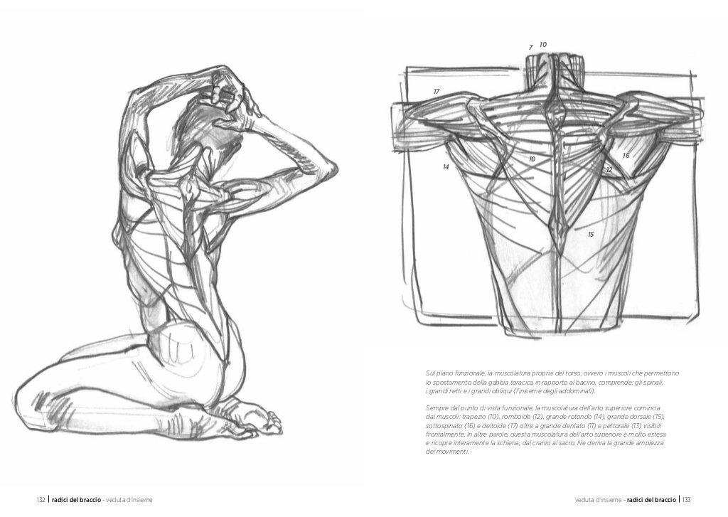 Anatomia artistica. Carnet di morfologia: Amazon.es: Michel ...