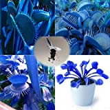 Trenton 100Pcs Blue Dionaea Muscipula Giant Venus Flytrap Seeds Garden Plants