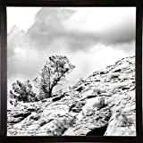 Frame USA Simple Tree At The Top B/W-HARLAN78294 Print 20''x20'' by Harold Silverman - Landscapes in a Cafe Espresso