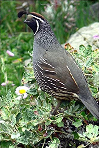Buy California State Bird California Quail Journal Book Online At Low Prices In India California State Bird California Quail Journal Reviews Ratings Amazon In