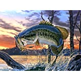 Friday S Chance Large Mouth Bass Oil P Buy Online In Bahamas At Desertcart