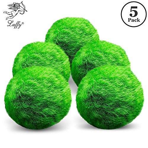 Luffy Marimo Moss Balls - Unique Green Spherical Plants - Create Legendary Lush Landscape in Your Aquarium - Natural Habitat for Triops/Sea Monkeys - Perfect Décor (Large (5-Pack)) by Luffy